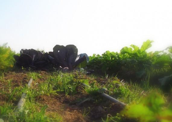 fattoria-del-soul-madre-terra